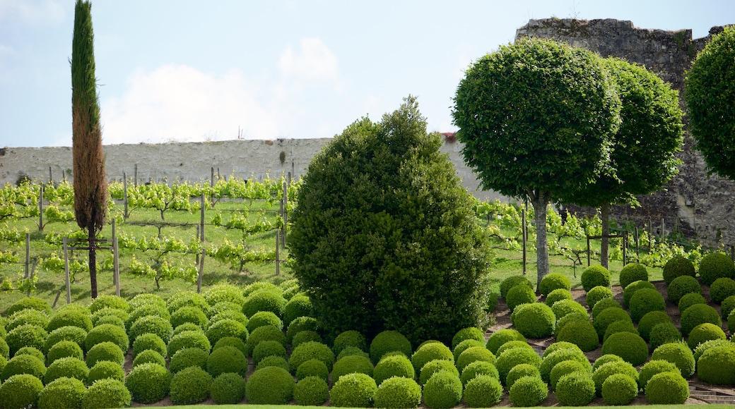 Chateau d\'Amboise featuring a park