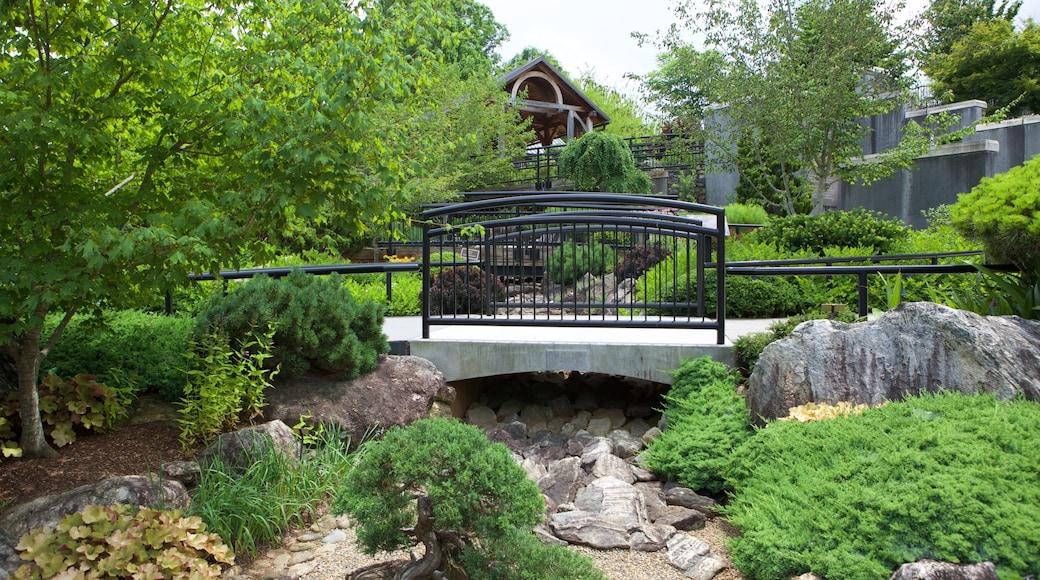 North Carolina Arboretum showing a park and a bridge