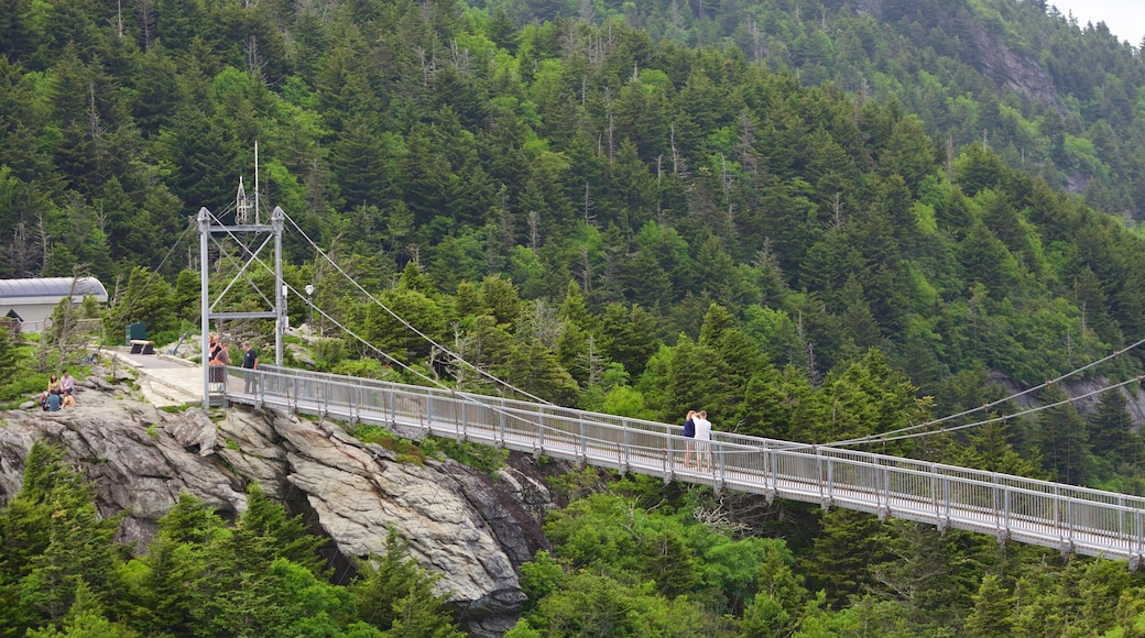 Grandfather Mountain which includes a suspension bridge or treetop walkway