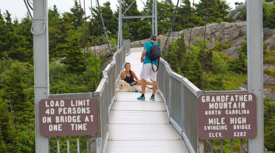 Grandfather Mountain showing cuddly or friendly animals and a suspension bridge or treetop walkway as well as a couple