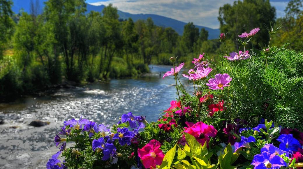 Steamboat Ski Resort ofreciendo flores, escenas tranquilas y un río o arroyo