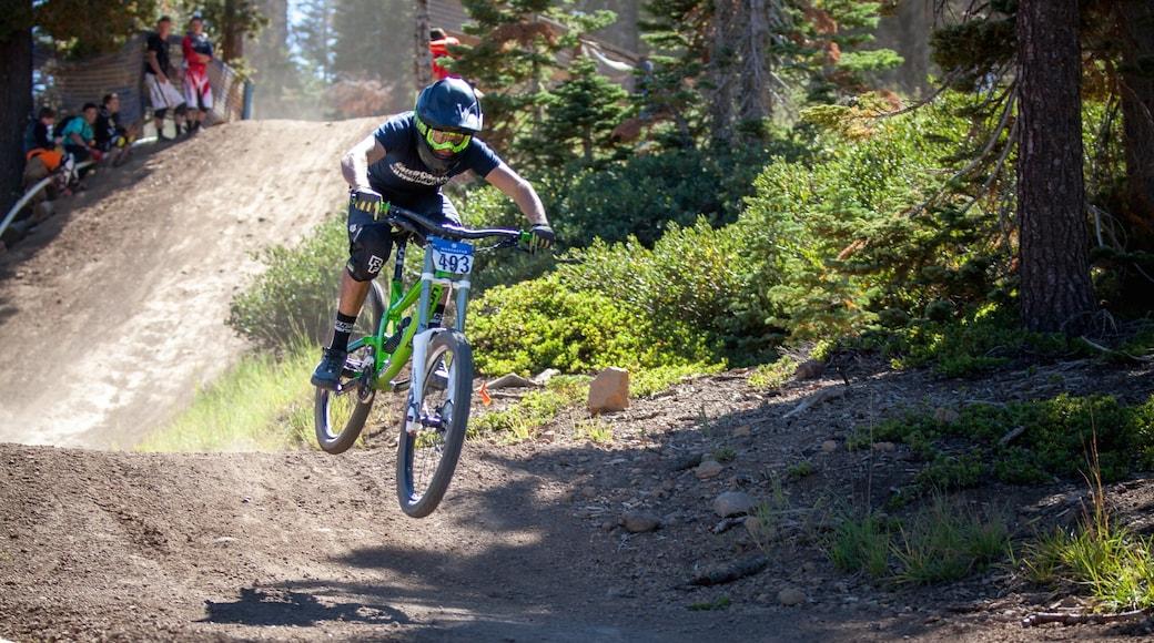 Northstar California Resort showing mountain biking as well as an individual male