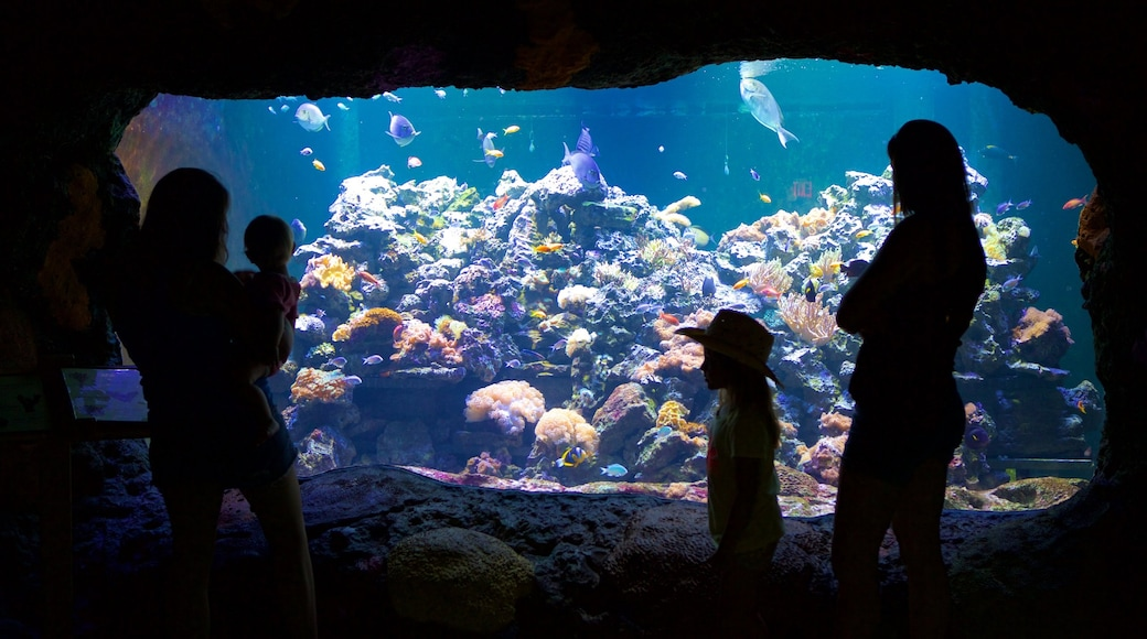 Virginia Aquarium and Marine Science Center showing marine life as well as a family
