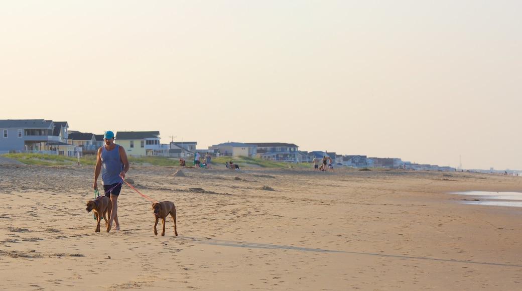 Sandbridge Beach featuring a beach and hiking or walking as well as an individual male
