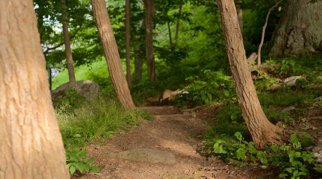 Shenandoah National Park featuring forests