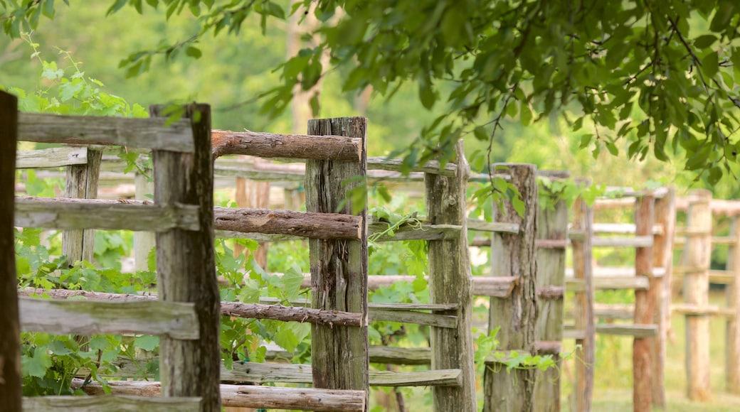 Monticello which includes a garden