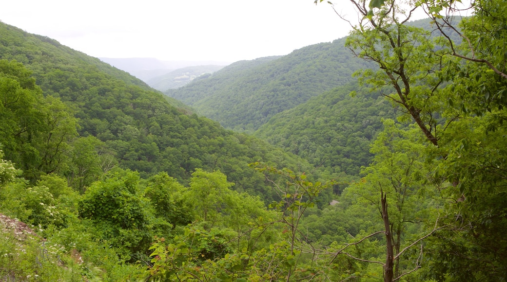 Canaan Valley which includes mountains and tranquil scenes
