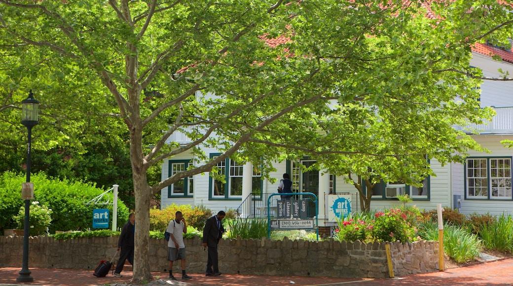 Bethesda, MD caracterizando uma casa e um parque