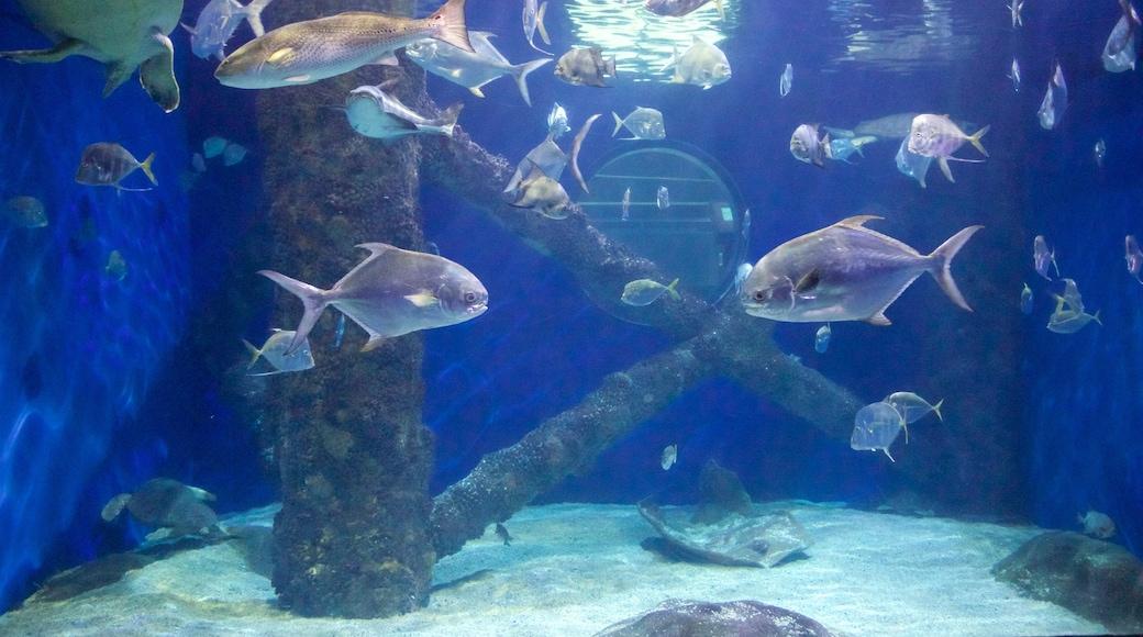 Virginia Aquarium and Marine Science Center which includes marine life
