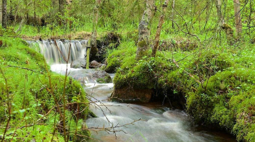 Äkäslompolo fasiliteter samt fossestryk og regnskog