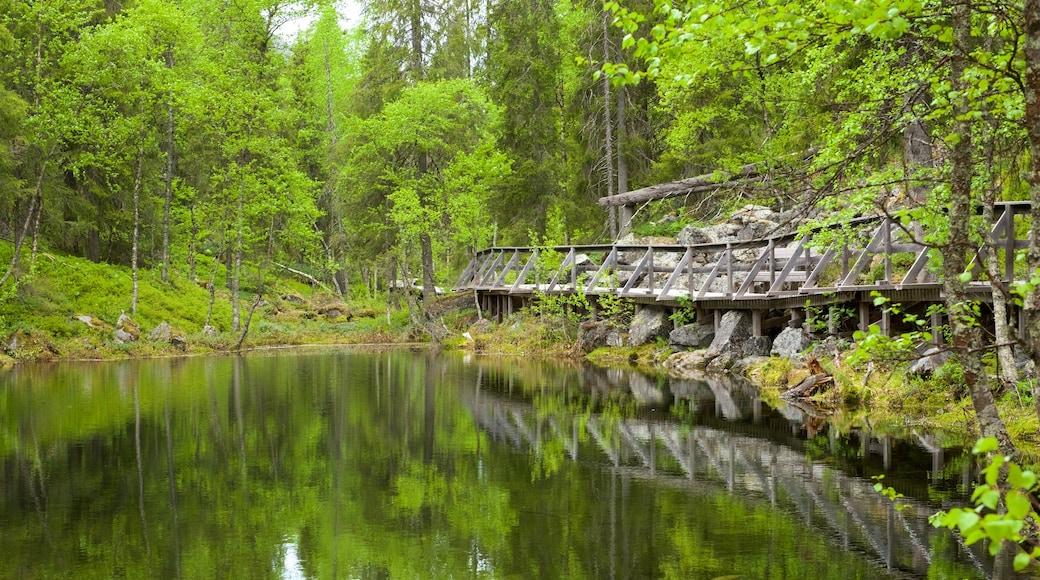 Pyhä-Luoston kansallispuisto joka esittää metsänäkymät, silta ja joki tai puro