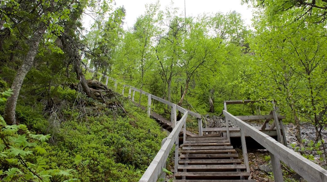Pyhä-Luoston kansallispuisto featuring silta ja metsänäkymät