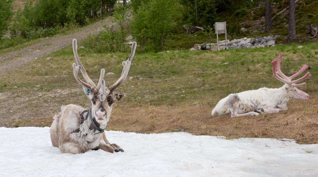 Pyhätunturi johon kuuluu lunta, maaeläimet ja rauhalliset maisemat