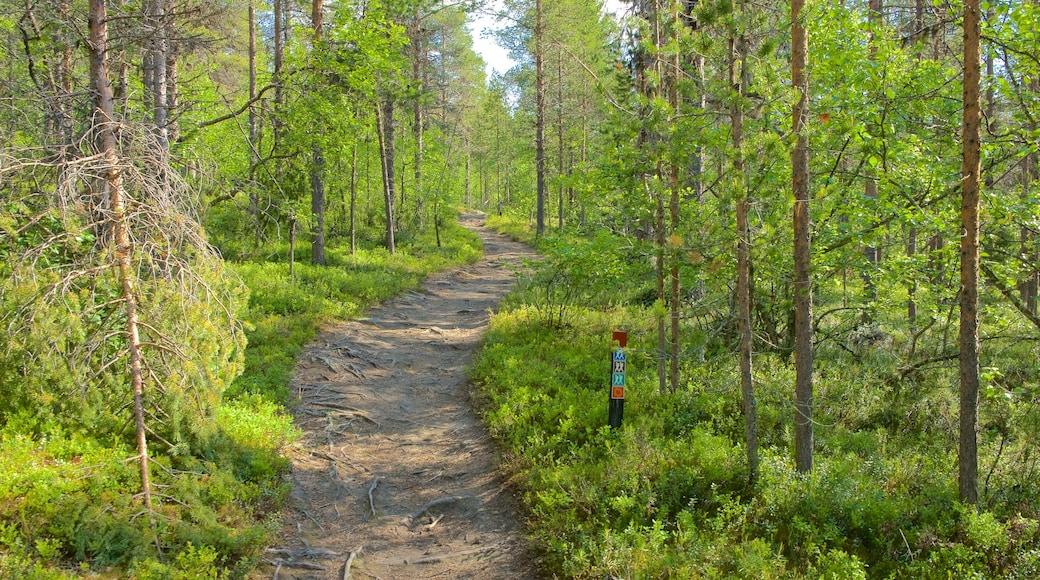 Enontekio johon kuuluu rauhalliset maisemat ja metsänäkymät