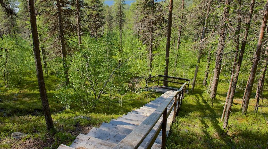 Enontekio johon kuuluu metsänäkymät