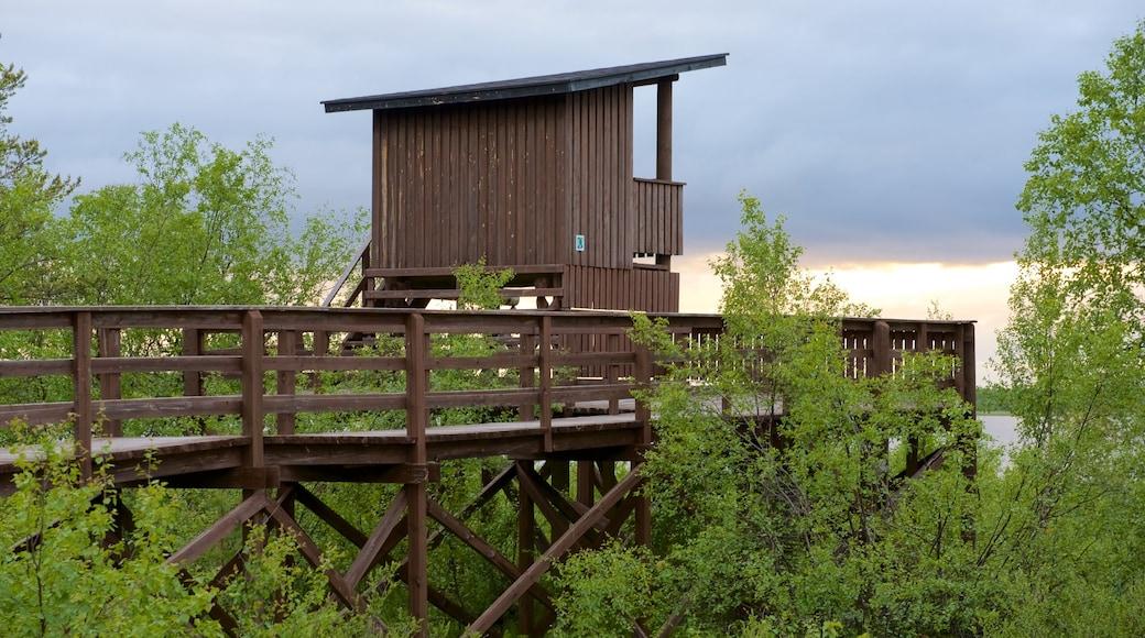 Sotkajärven lintutorni featuring näkymät ja rauhalliset maisemat