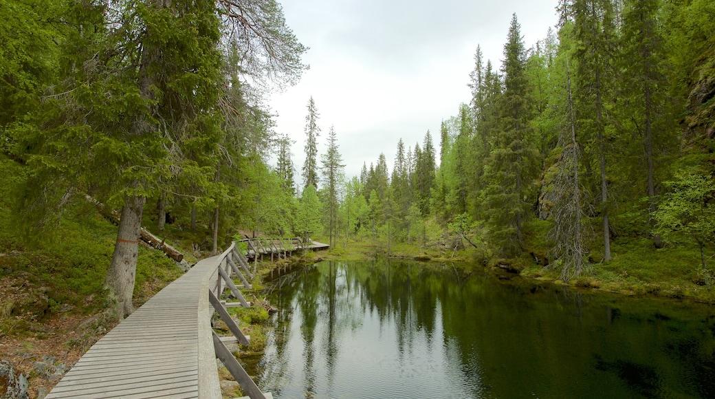 Pyhä-Luoston kansallispuisto johon kuuluu järvi tai vesikuoppa ja metsät
