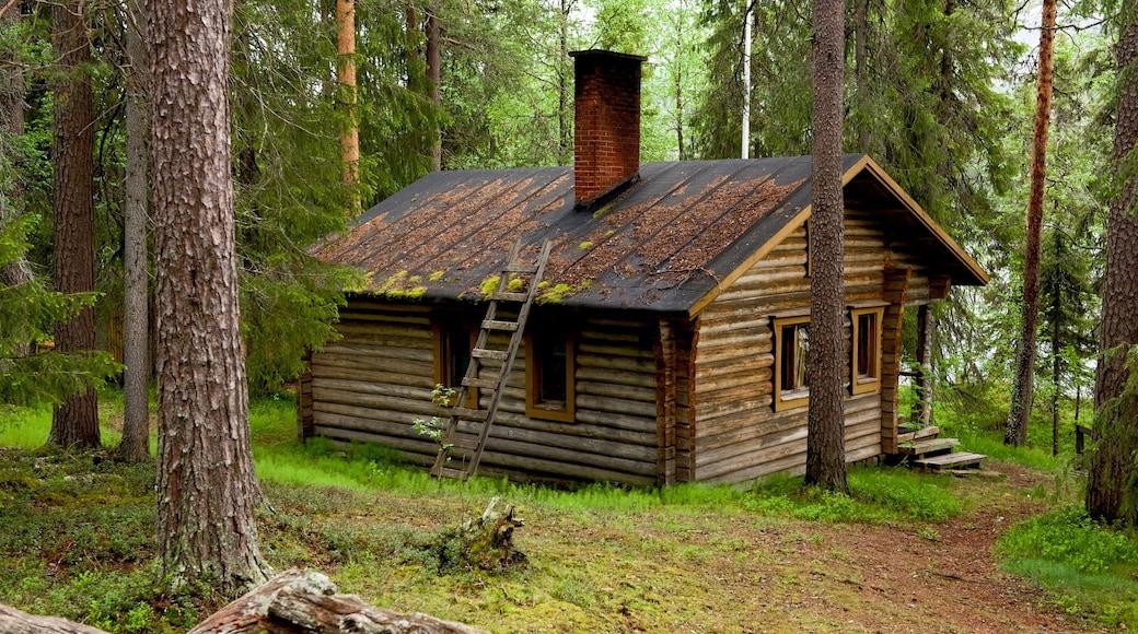 Pallas-Yllästunturin kansallispuisto joka esittää metsät ja talo