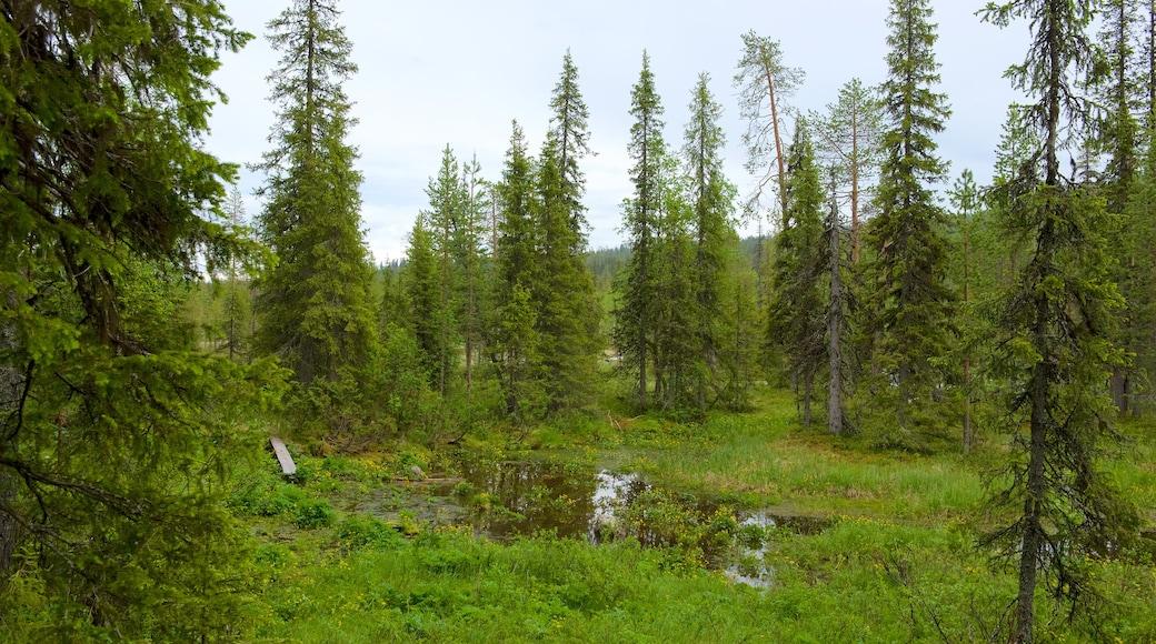 Pallas-Yllästunturin kansallispuisto joka esittää metsät ja järvi tai vesikuoppa