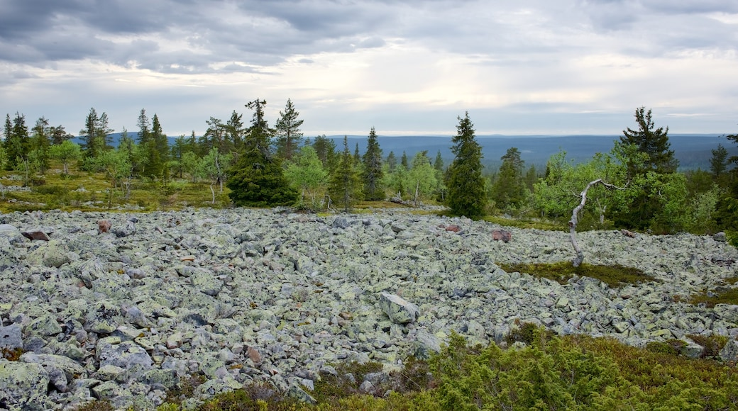 Pallas-Yllästunturin kansallispuisto joka esittää maisemat, rauhalliset maisemat ja metsät