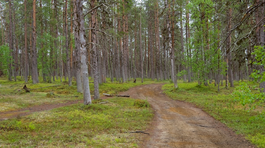 Pallas-Yllästunturin kansallispuisto johon kuuluu rauhalliset maisemat ja metsänäkymät