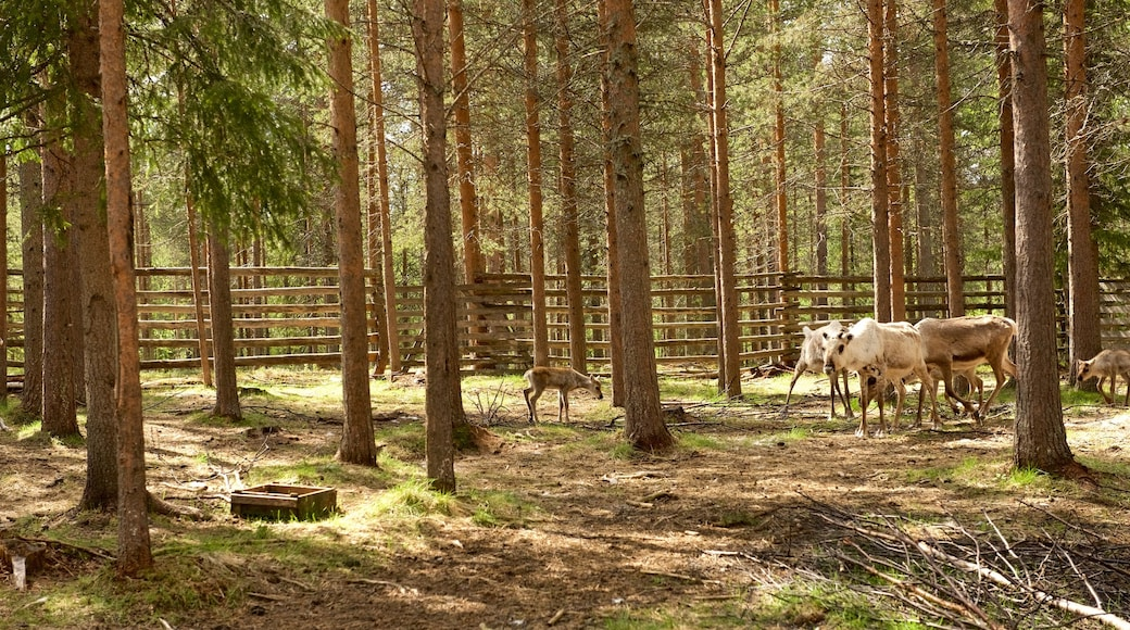 Luosto featuring maatila, söpöt tai ystävälliset eläimet ja rauhalliset maisemat