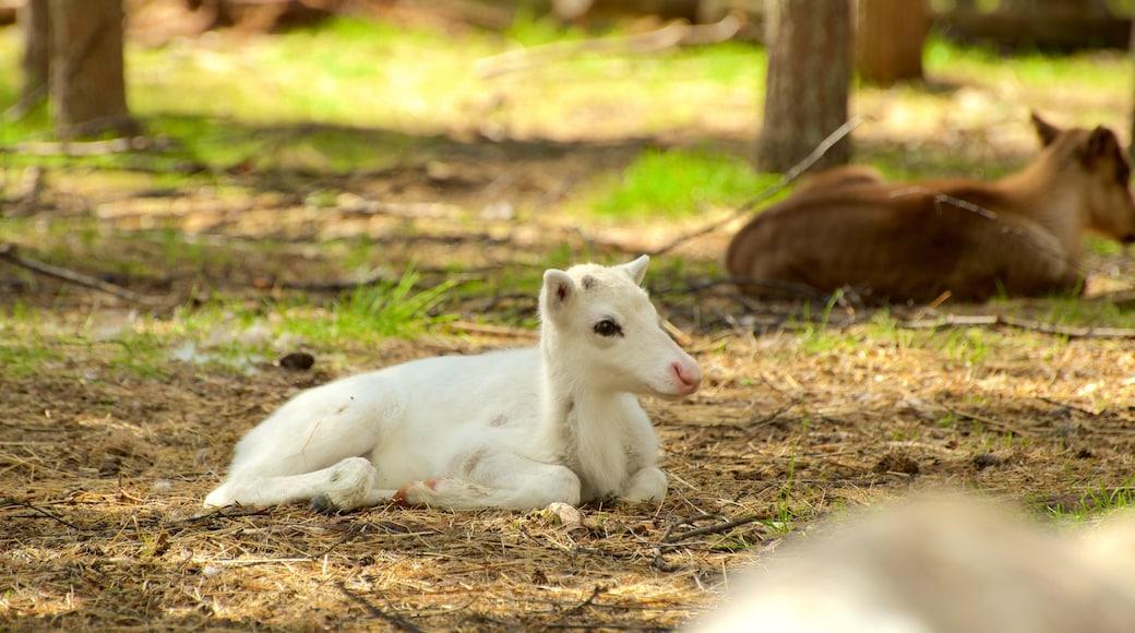Luosto featuring söpöt tai ystävälliset eläimet ja maatila