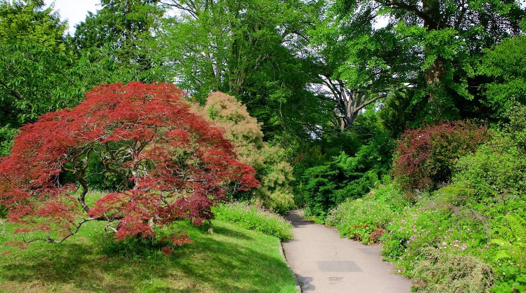 Royal Victoria Park featuring a park
