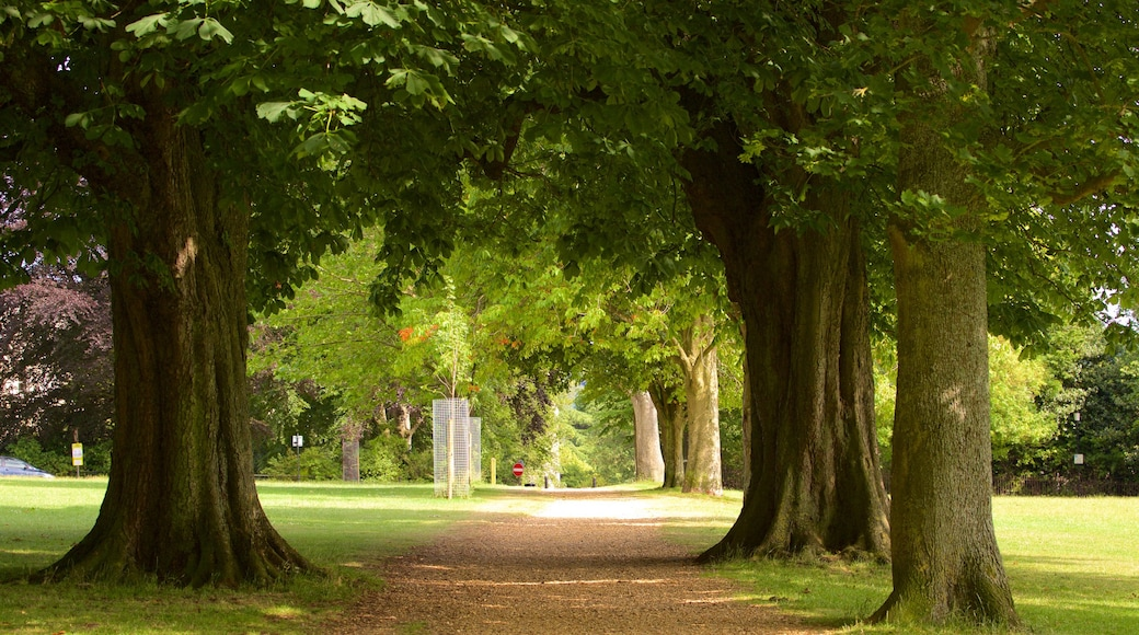 Royal Victoria Park showing a park