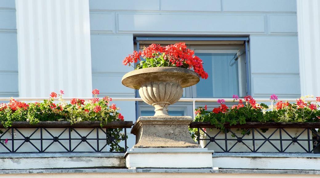 Helsinki City Hall featuring flowers