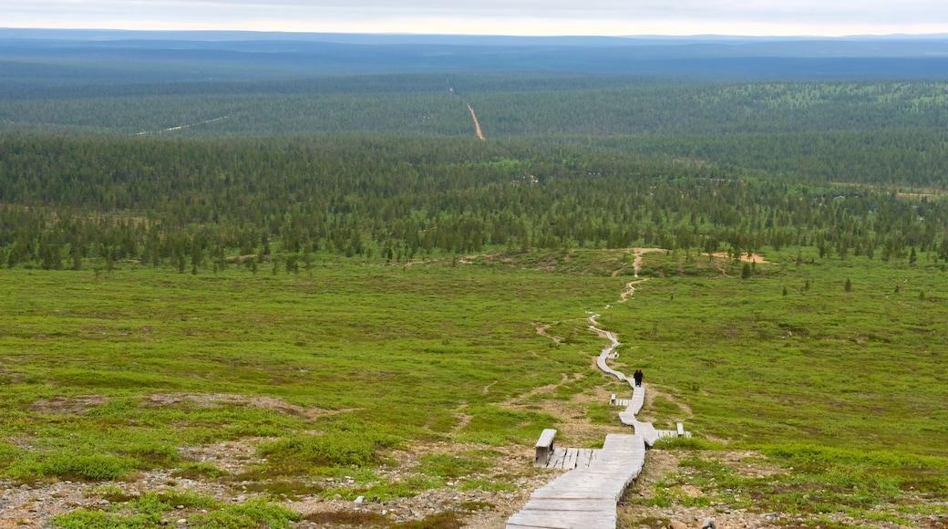 Sodankylä