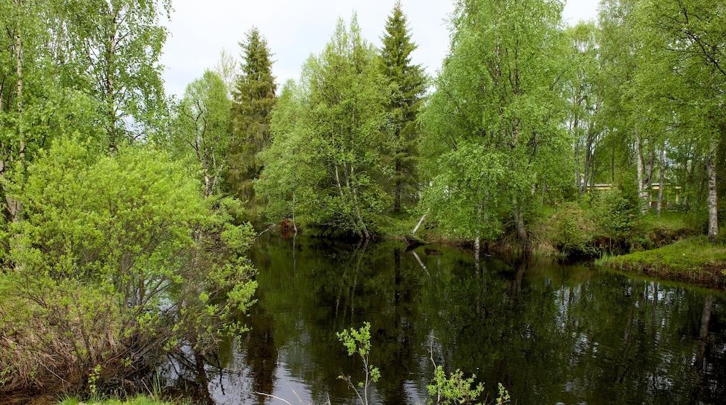 Kuusamo Park som visar en å eller flod och skogslandskap