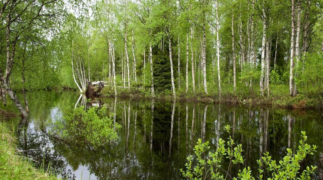 Kuusamo park som viser elv eller bekk og skog