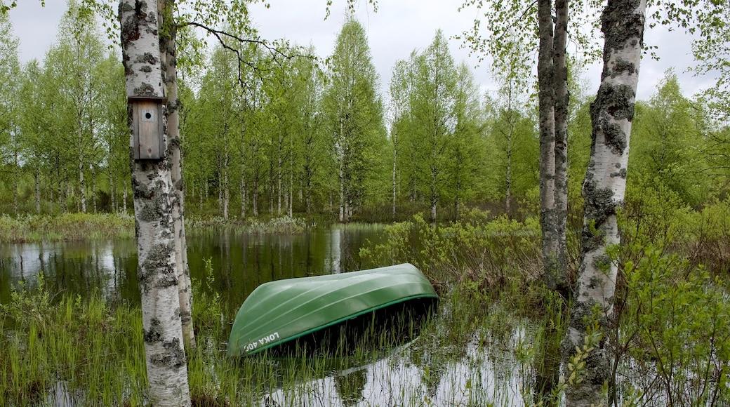 Kuusamo park som viser skoglandskap og elv eller bekk