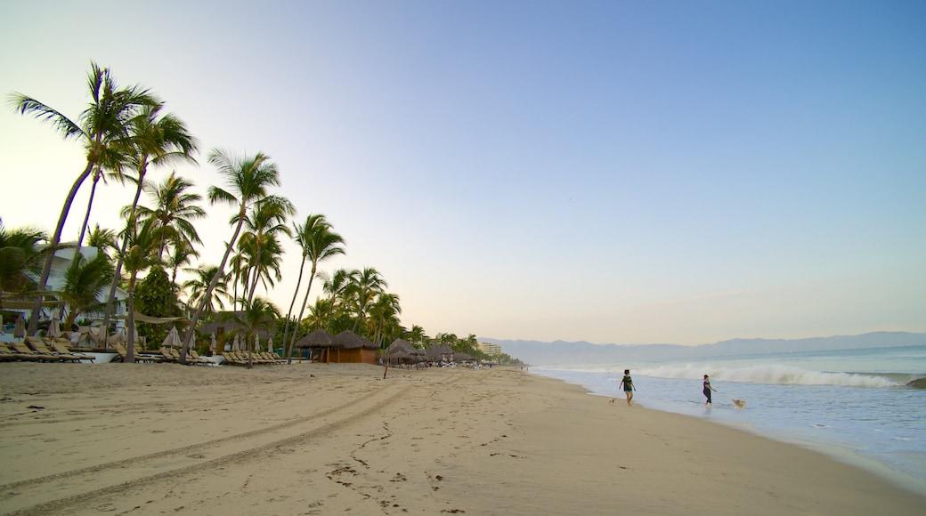 Nuevo Vallarta Beach featuring a beach and tropical scenes