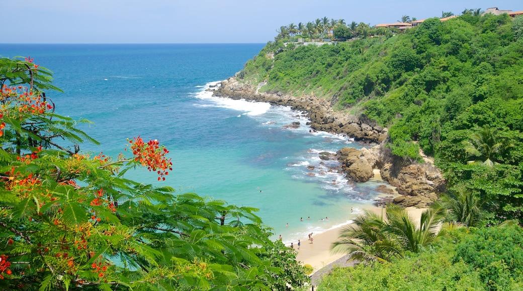 Playa de Carrizalillo que incluye costa escarpada, una playa y escenas tropicales