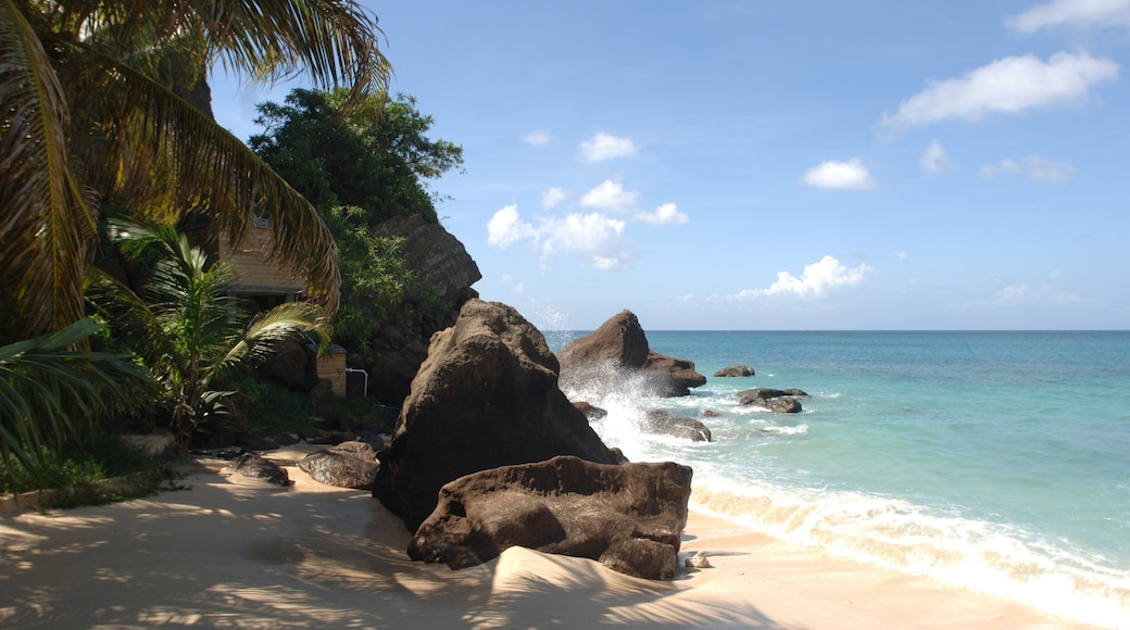 Grenada featuring a beach and tropical scenes