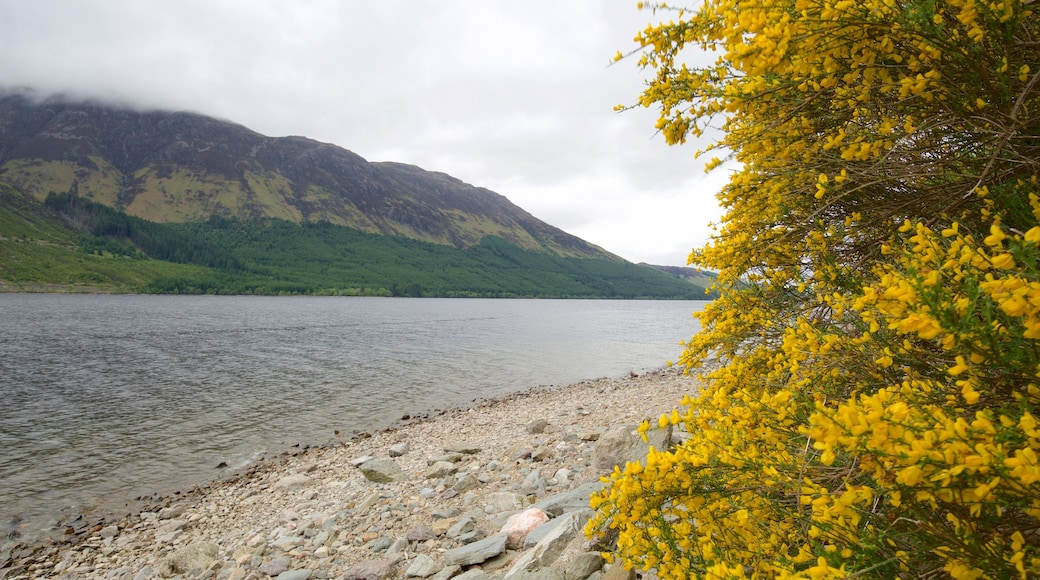 Fort William which includes tranquil scenes, wild flowers and mountains