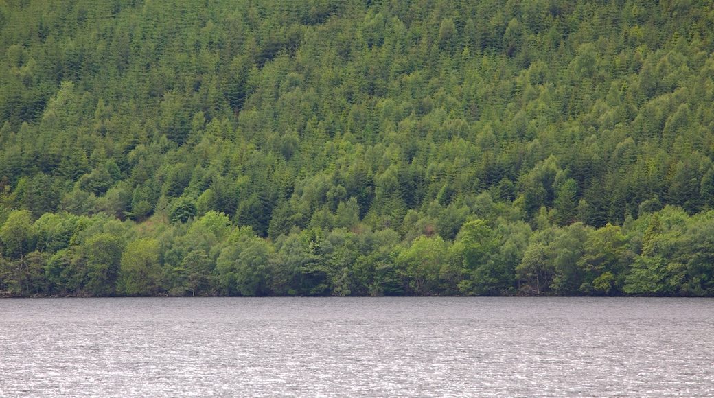 Fort William showing a lake or waterhole, forests and tranquil scenes