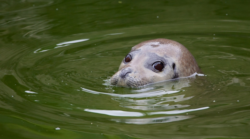 Scottish Sealife Sanctuary which includes zoo animals, cuddly or friendly animals and marine life