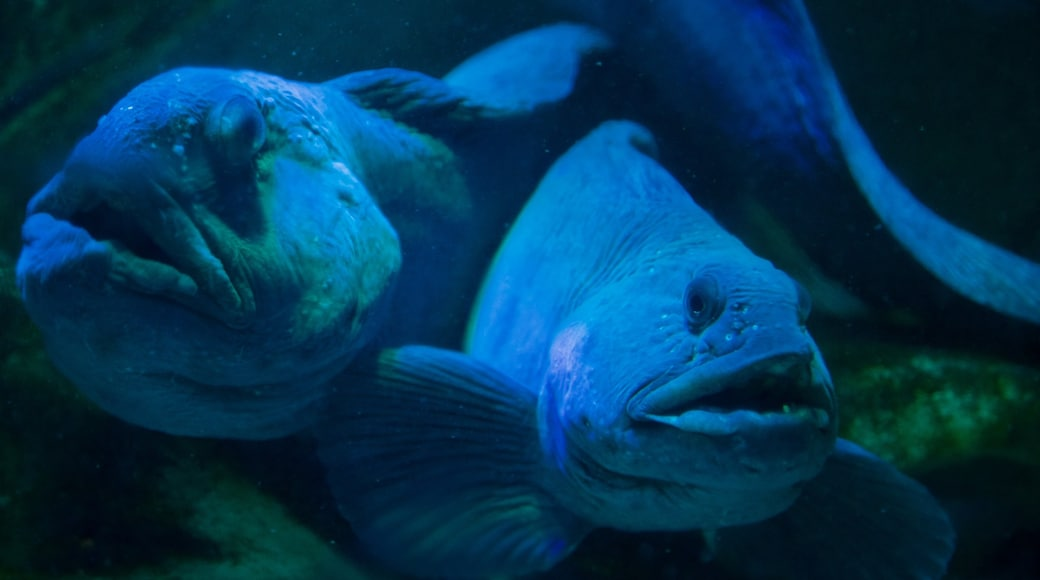 Scottish Sealife Sanctuary showing marine life and zoo animals
