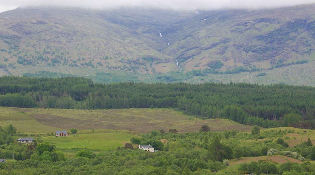 Ben Nevis showing mountains, forest scenes and tranquil scenes