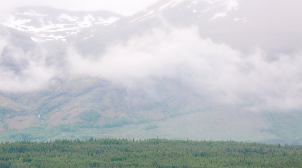 Ben Nevis which includes mist or fog, forest scenes and mountains
