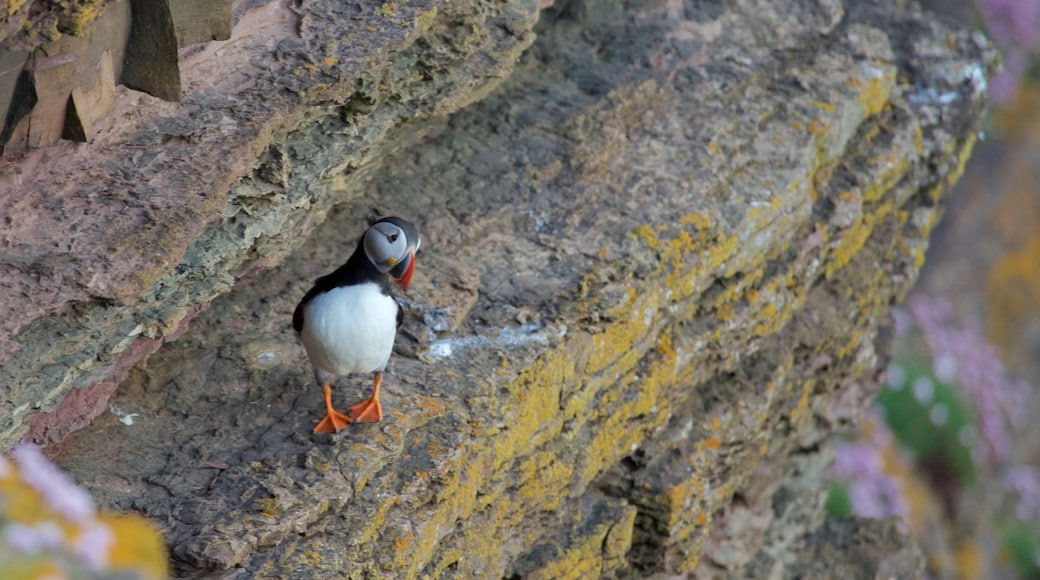Duncansby Head showing bird life and cuddly or friendly animals