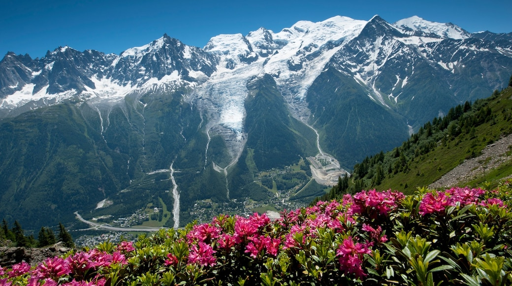 Mont Blanc featuring snow, tranquil scenes and wild flowers