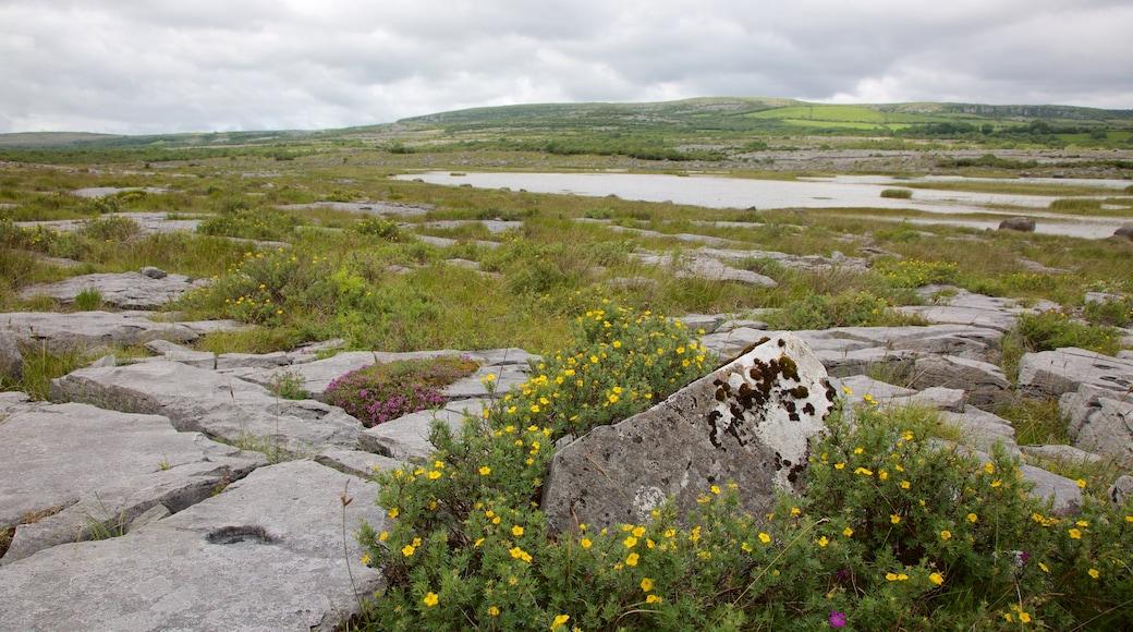 The Burren das einen ruhige Szenerie und Wildblumen
