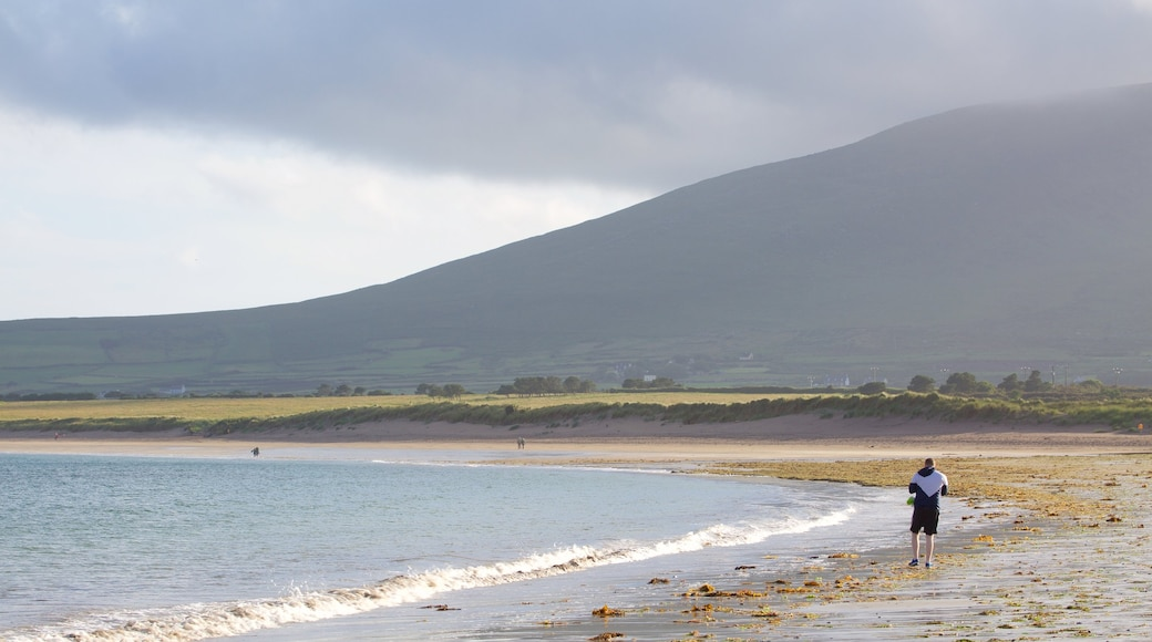 Ventry Beach showing general coastal views, tranquil scenes and rugged coastline