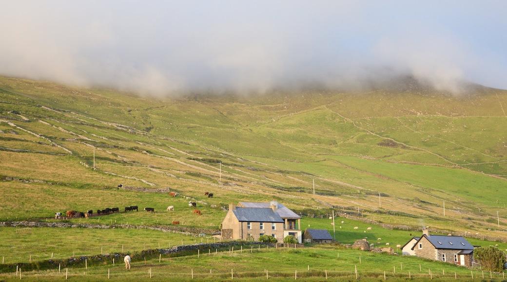 Dunmore Head mit einem ruhige Szenerie, Landtiere und Farmland