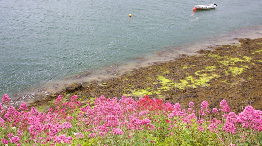 Rosses Point which includes a lake or waterhole, flowers and wildflowers