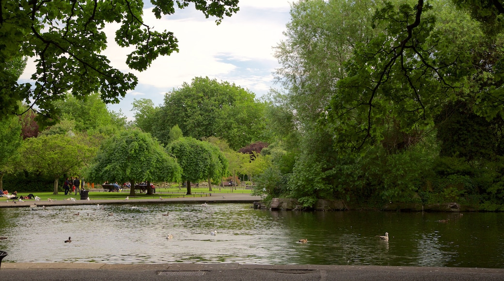 St. Stephen\'s Green which includes a park and a pond